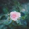 Картина «Нежность» - автор Сергей Елизаров, живопись, холст, масло, 40×40 см, 2018 год.
