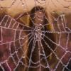 Картина «Босиком по росе» - автор художник Сергей Елизаров, живопись, холст, масло, 40×30 см, 2019 год.
