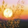 Картина «Солнце» - автор художник Сергей Елизаров, живопись, холст, масло, 40×30 см, 2019 год.