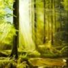 Картина «Утро в лесу» - автор художник Сергей Елизаров, живопись, холст, масло, 50×40 см, 2019 год.